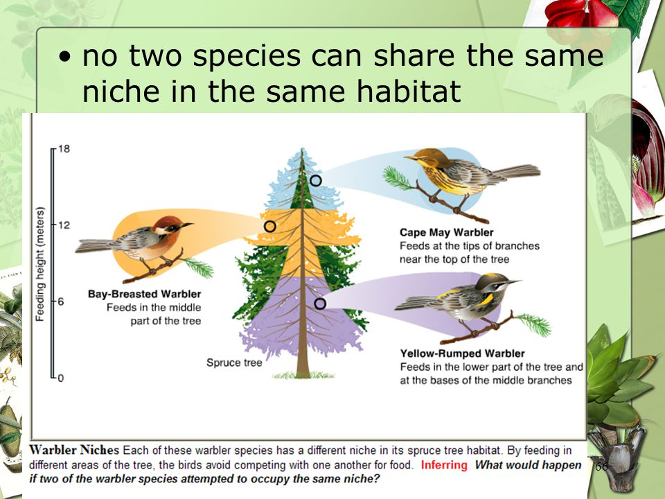 66 no two species can share the same niche in the same habitat