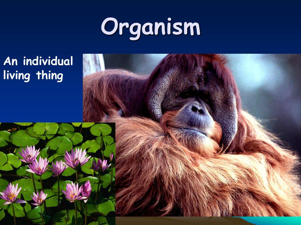 Organism An individual living thing