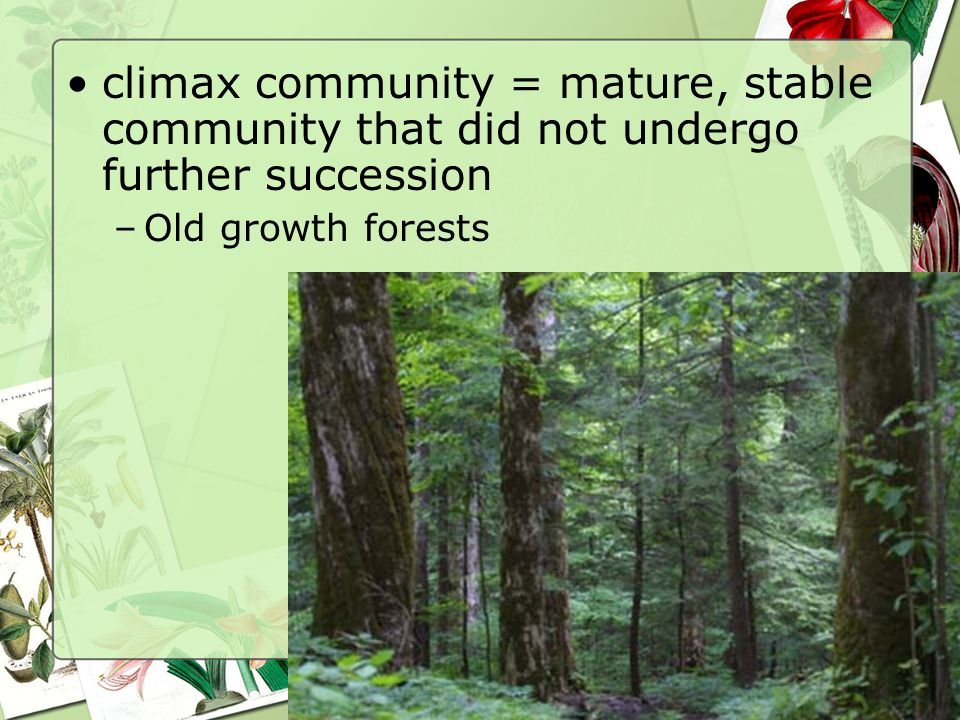 81 climax community = mature, stable community that did not undergo further succession –Old growth forests