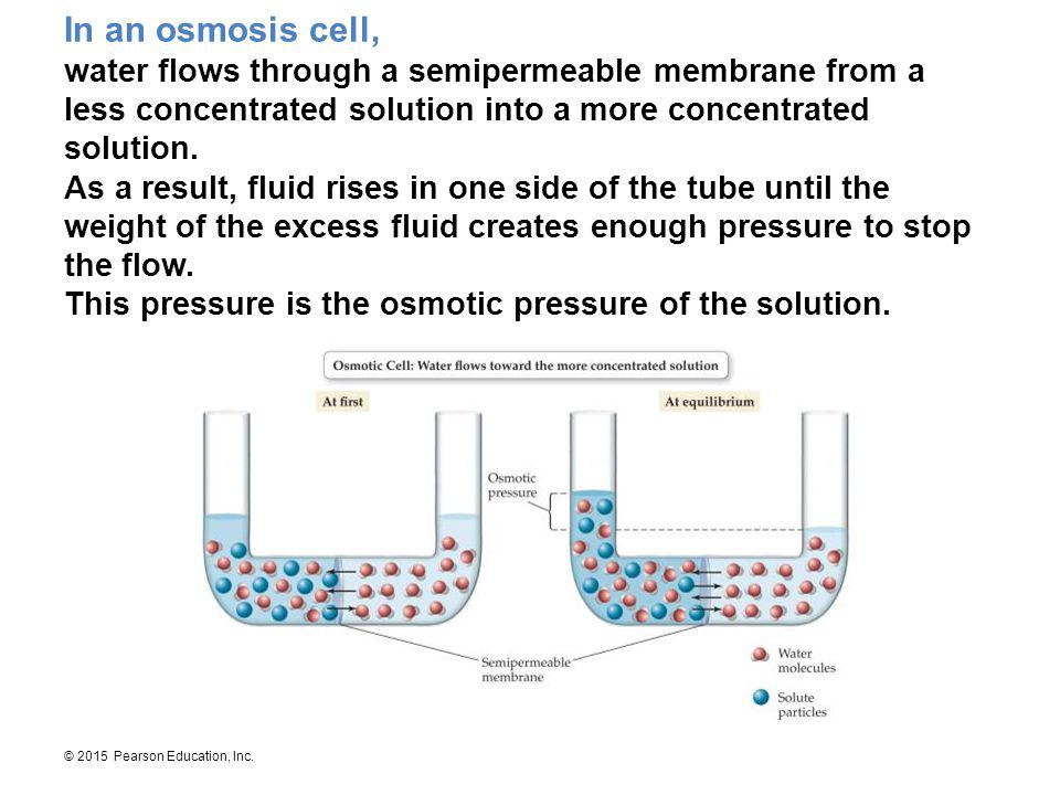 © 2015 Pearson Education, Inc. In an osmosis cell, water flows through a semipermeable membrane from a less concentrated solution into a more concentr