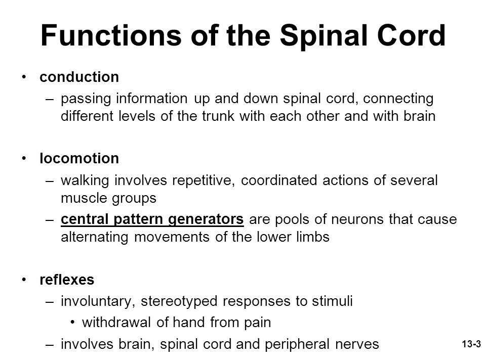 13-3 Functions of the Spinal Cord conduction –passing information up and down spinal cord, connecting different levels of the trunk with each other and with brain locomotion –walking involves repetitive, coordinated actions of several muscle groups –central pattern generators are pools of neurons that cause alternating movements of the lower limbs reflexes –involuntary, stereotyped responses to stimuli withdrawal of hand from pain –involves brain, spinal cord and peripheral nerves