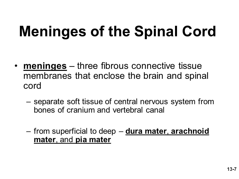 13-7 Meninges of the Spinal Cord meninges – three fibrous connective tissue membranes that enclose the brain and spinal cord –separate soft tissue of central nervous system from bones of cranium and vertebral canal –from superficial to deep – dura mater, arachnoid mater, and pia mater