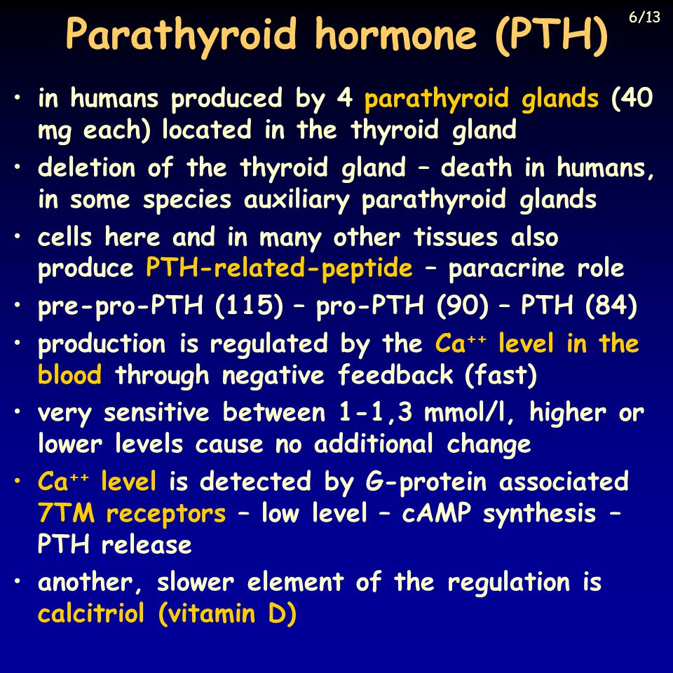 Parathyroid hormone (PTH) in humans produced by 4 parathyroid glands (40 mg each) located in the thyroid gland deletion of the thyroid gland – death in humans, in some species auxiliary parathyroid glands cells here and in many other tissues also produce PTH-related-peptide – paracrine role pre-pro-PTH (115) – pro-PTH (90) – PTH (84) production is regulated by the Ca ++ level in the blood through negative feedback (fast) very sensitive between 1-1,3 mmol/l, higher or lower levels cause no additional change Ca ++ level is detected by G-protein associated 7TM receptors – low level – cAMP synthesis – PTH release another, slower element of the regulation is calcitriol (vitamin D) 6/13