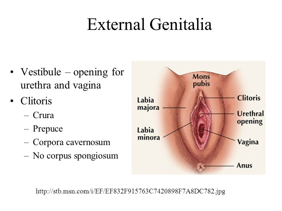 Reproductive System Disorders List Of Symptoms Vagina.
