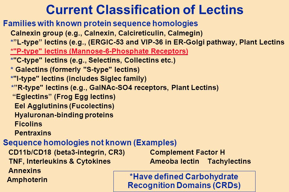 "Current Classification of Lectins Families with known protein sequence homologies Calnexin group (e.g., Calnexin, Calcireticulin, Calmegin) *""L-type"""