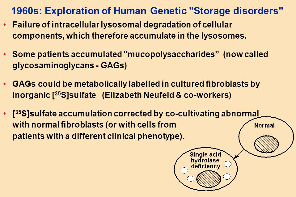 1960s: Exploration of Human Genetic Storage disorders Failure of intracellular lysosomal degradation of cellular components, which therefore accumulate in the lysosomes.