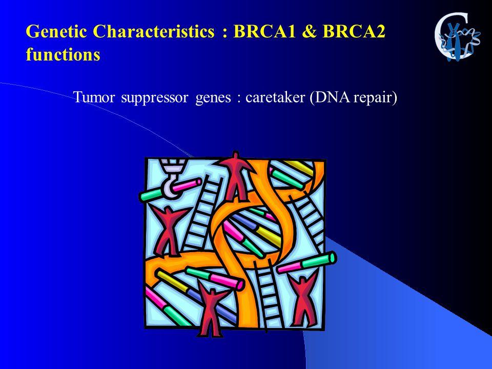 Tumor suppressor genes : caretaker (DNA repair) Genetic Characteristics : BRCA1 & BRCA2 functions