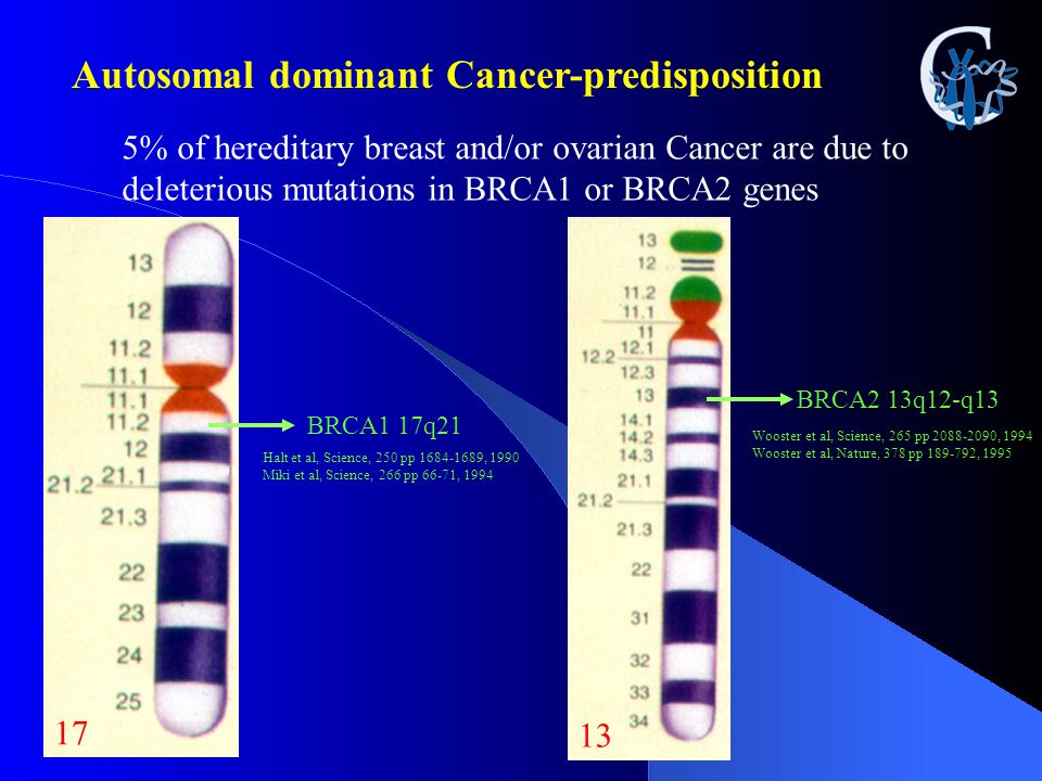 Autosomal dominant Cancer-predisposition 5% of hereditary breast and/or ovarian Cancer are due to deleterious mutations in BRCA1 or BRCA2 genes 17 BRC