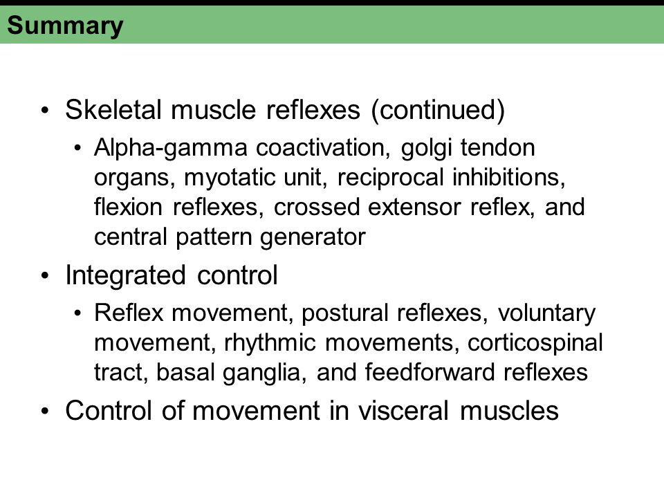 Summary Skeletal muscle reflexes (continued) Alpha-gamma coactivation, golgi tendon organs, myotatic unit, reciprocal inhibitions, flexion reflexes, c