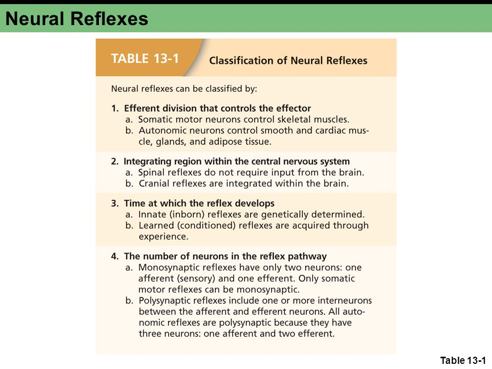 Somatic Motor Reflexes Monosynaptic and polysynaptic somatic motor reflexes Figure 13-1a Stimulus Sensory neuron Receptor Efferent neuron Target cell effector Response (a) A monosynaptic reflex has a single synapse between the afferent and efferent neurons.