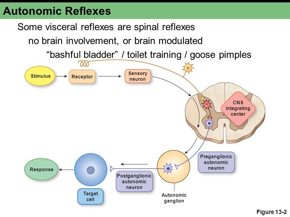 Muscle Reflexes Help Prevent Damage Figure 13-6b