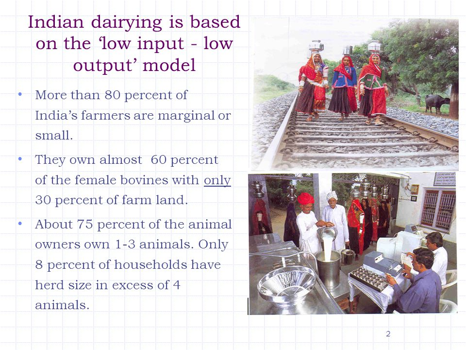 Indian dairying is based on the 'low input - low output' model More than 80 percent of India's farmers are marginal or small.