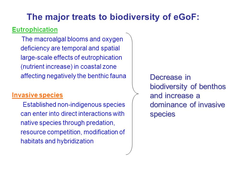 The major treats to biodiversity of eGoF: Eutrophication The macroalgal blooms and oxygen deficiency are temporal and spatial large-scale effects of eutrophication (nutrient increase) in coastal zone affecting negatively the benthic fauna Invasive species Established non-indigenous species can enter into direct interactions with native species through predation, resource competition, modification of habitats and hybridization Decrease in biodiversity of benthos and increase a dominance of invasive species