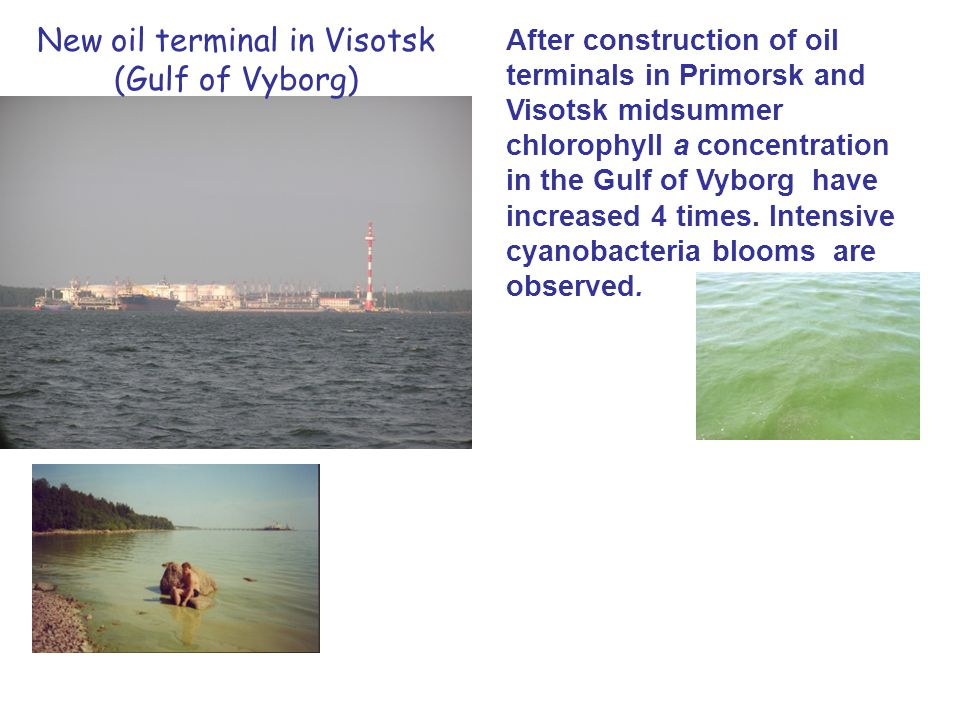 After construction of oil terminals in Primorsk and Visotsk midsummer chlorophyll a concentration in the Gulf of Vyborg have increased 4 times.