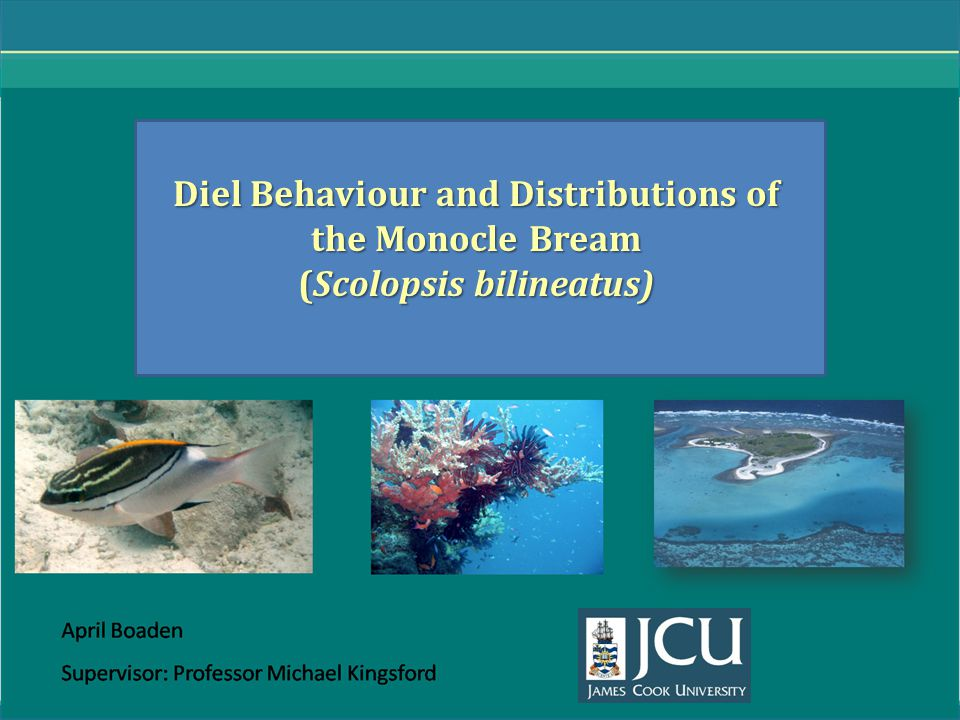 Diel Behaviour and Distributions of the Monocle Bream (Scolopsis bilineatus)