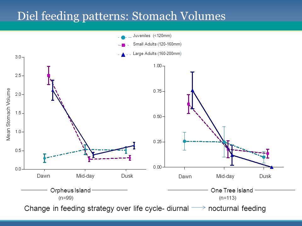 Diel feeding patterns: Stomach Volumes Change in feeding strategy over life cycle- diurnal nocturnal feeding Orpheus Island (n=99) One Tree Island (n=