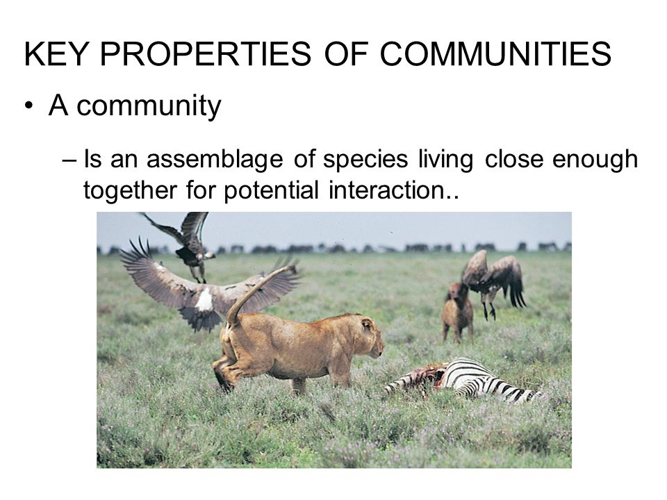 The diversity of a community is the variety of different kinds of organisms that make up the community There are two main components: 1.Diversity –Species richness, the total number of different species in the community –Relative abundance of the different species..