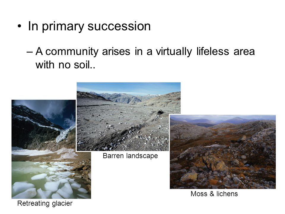 Primary succession from barren soil to a complex community can take hundreds of years..