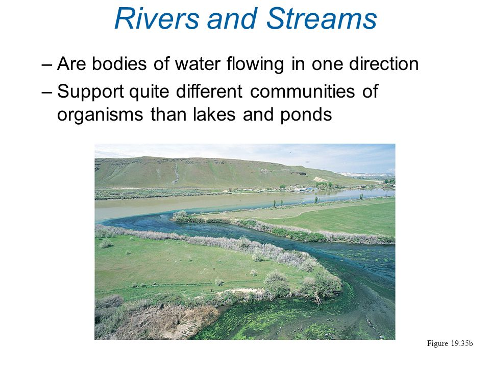 Marshes, ponds, and other wetlands –Are common in downstream areas Figure 19.35c