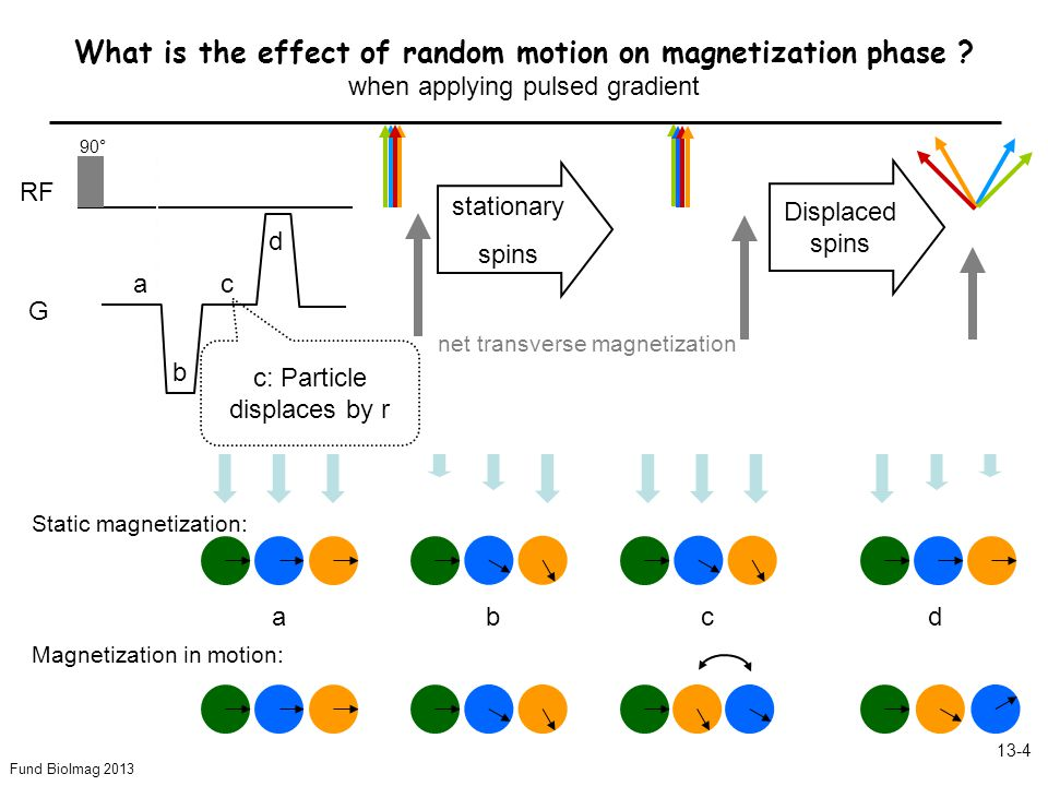 Fund BioImag 2013 13-4 What is the effect of random motion on magnetization phase .