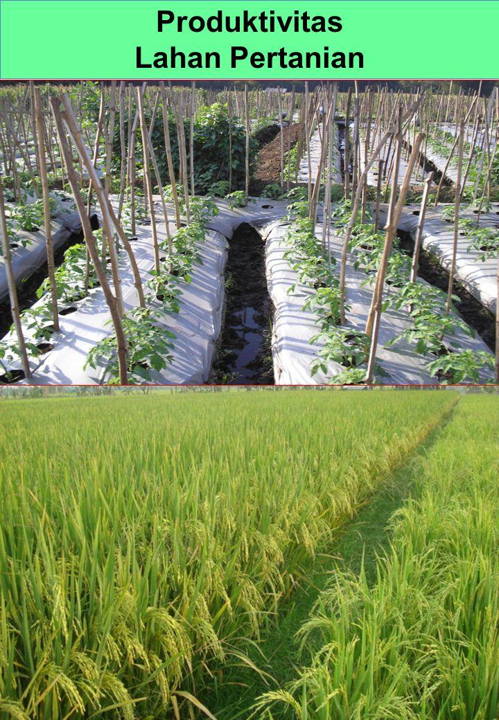 Produktivitas Lahan Pertanian