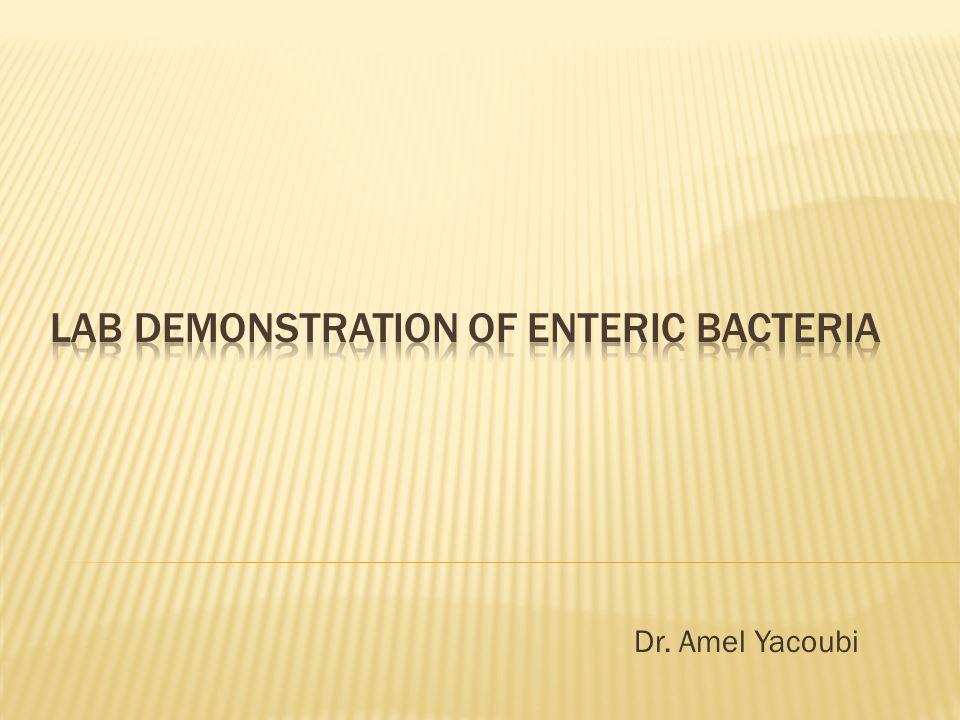 Dr. Amel Yacoubi