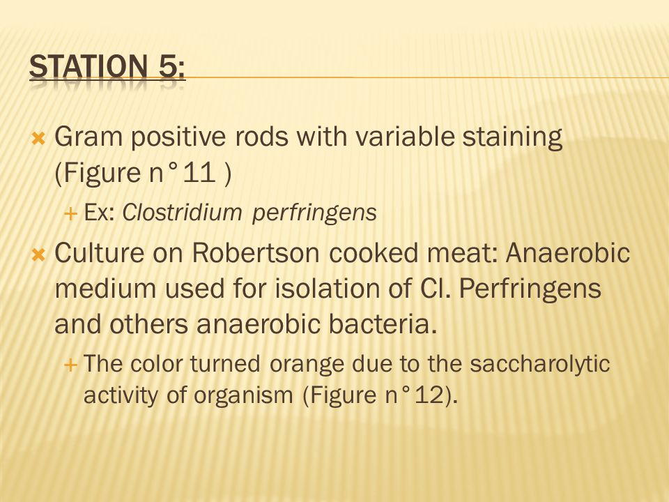  Gram positive rods with variable staining (Figure n°11 )  Ex: Clostridium perfringens  Culture on Robertson cooked meat: Anaerobic medium used for