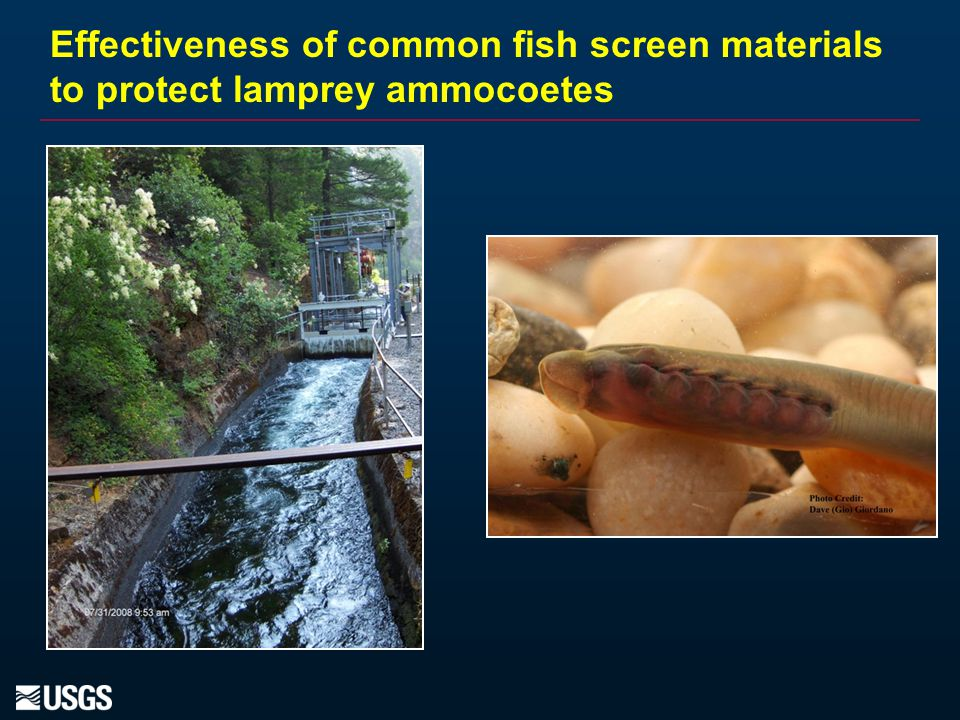 Effectiveness of common fish screen materials to protect lamprey ammocoetes