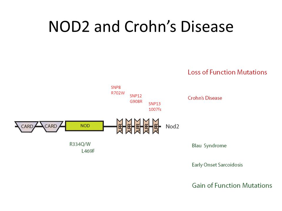 NOD2 and Crohn's Disease SNP8 R702W SNP12 G908R SNP13 1007fs