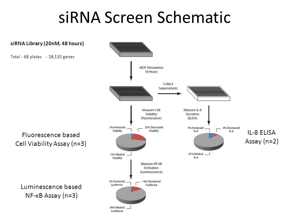 siRNA Screen Schematic Fluorescence based Cell Viability Assay (n=3) Luminescence based NF-κB Assay (n=3) IL-8 ELISA Assay (n=2) siRNA Library (20nM,