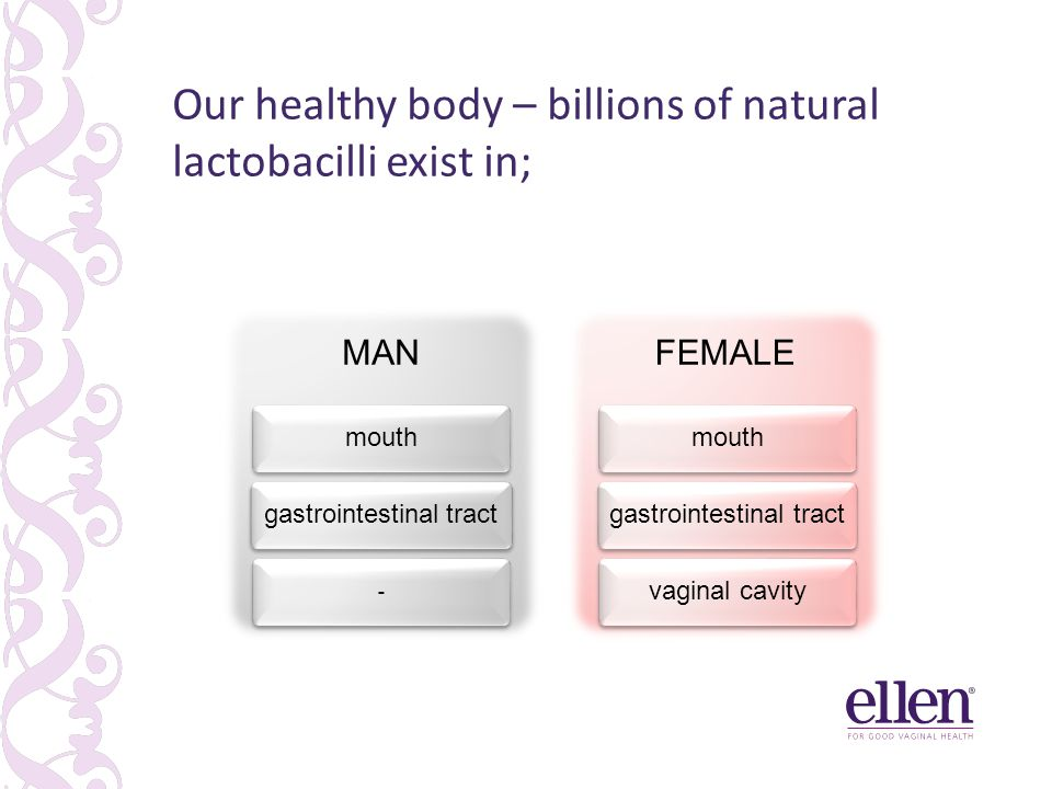 MAN mouthgastrointestinal tract - FEMALE mouthgastrointestinal tractvaginal cavity Our healthy body – billions of natural lactobacilli exist in;
