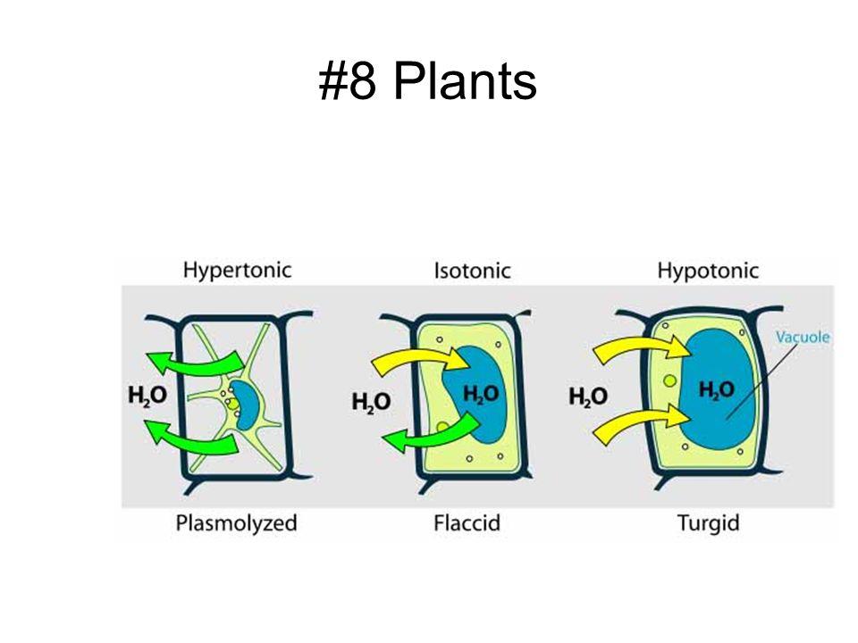 #8 Plants