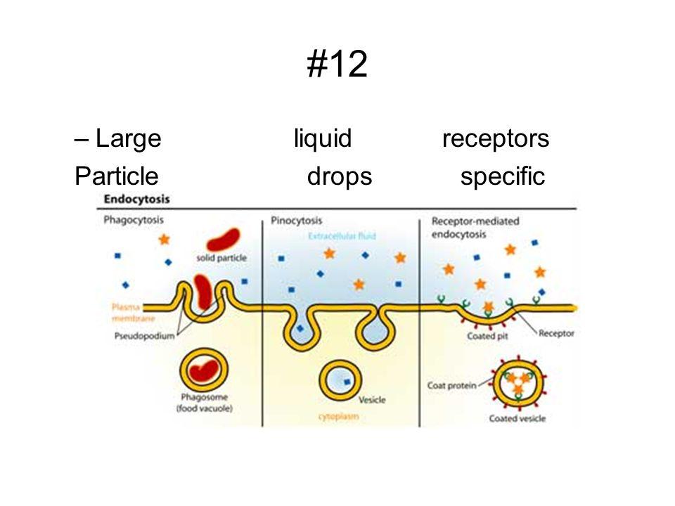 #12 –Large liquid receptors Particle drops specific