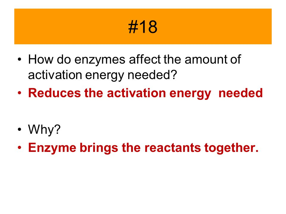 #18 How do enzymes affect the amount of activation energy needed? Reduces the activation energy needed Why? Enzyme brings the reactants together.