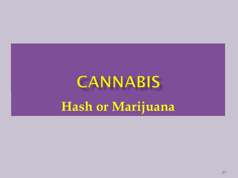 Hash or Marijuana 57