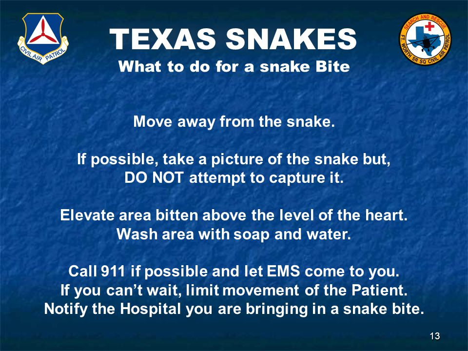 TEXAS SNAKES 13 What to do for a snake Bite Move away from the snake.