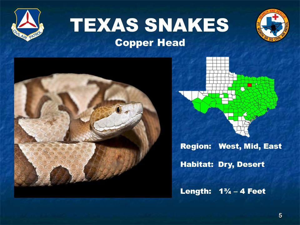 TEXAS SNAKES 5 Copper Head Region: West, Mid, East Habitat: Dry, Desert Length: 1¾ – 4 Feet