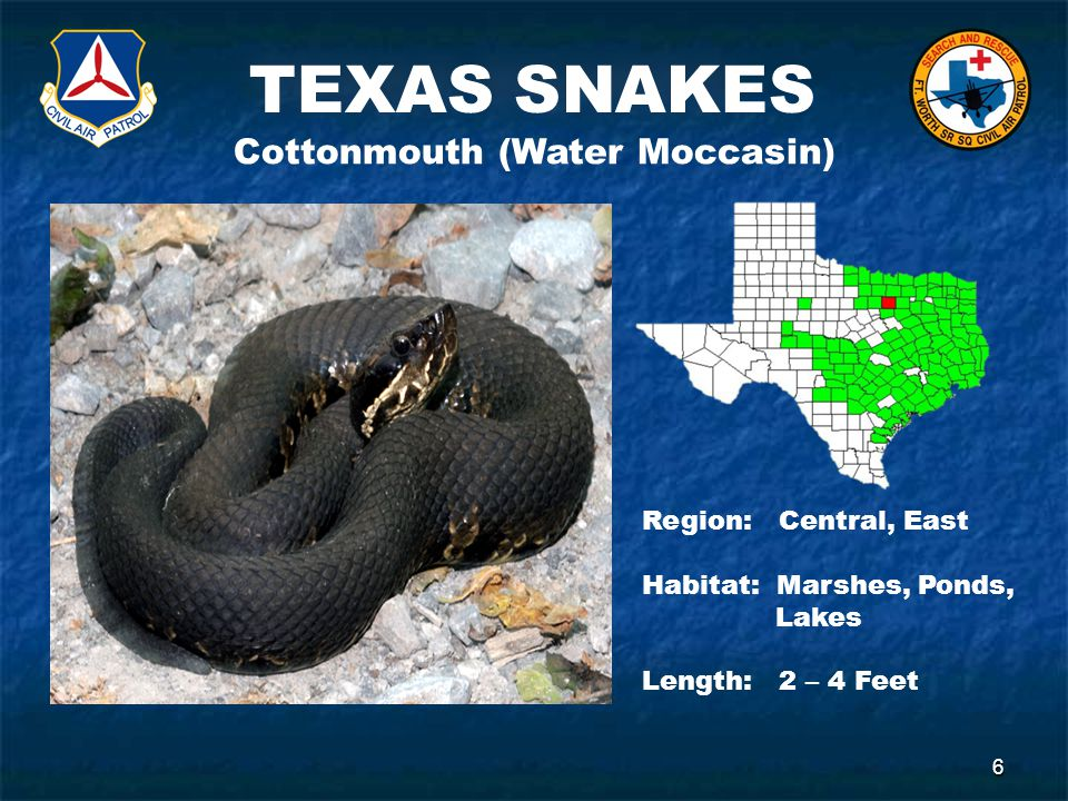 TEXAS SNAKES 6 Cottonmouth (Water Moccasin) Region: Central, East Habitat: Marshes, Ponds, Lakes Length: 2 – 4 Feet