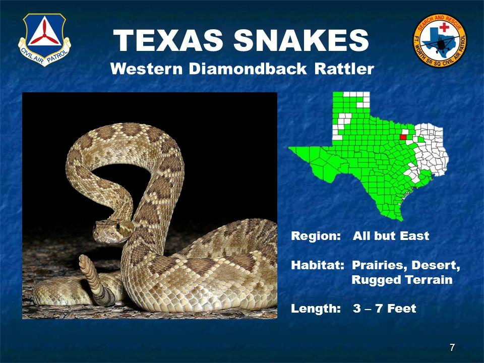 TEXAS SNAKES 7 Western Diamondback Rattler Region: All but East Habitat: Prairies, Desert, Rugged Terrain Length: 3 – 7 Feet