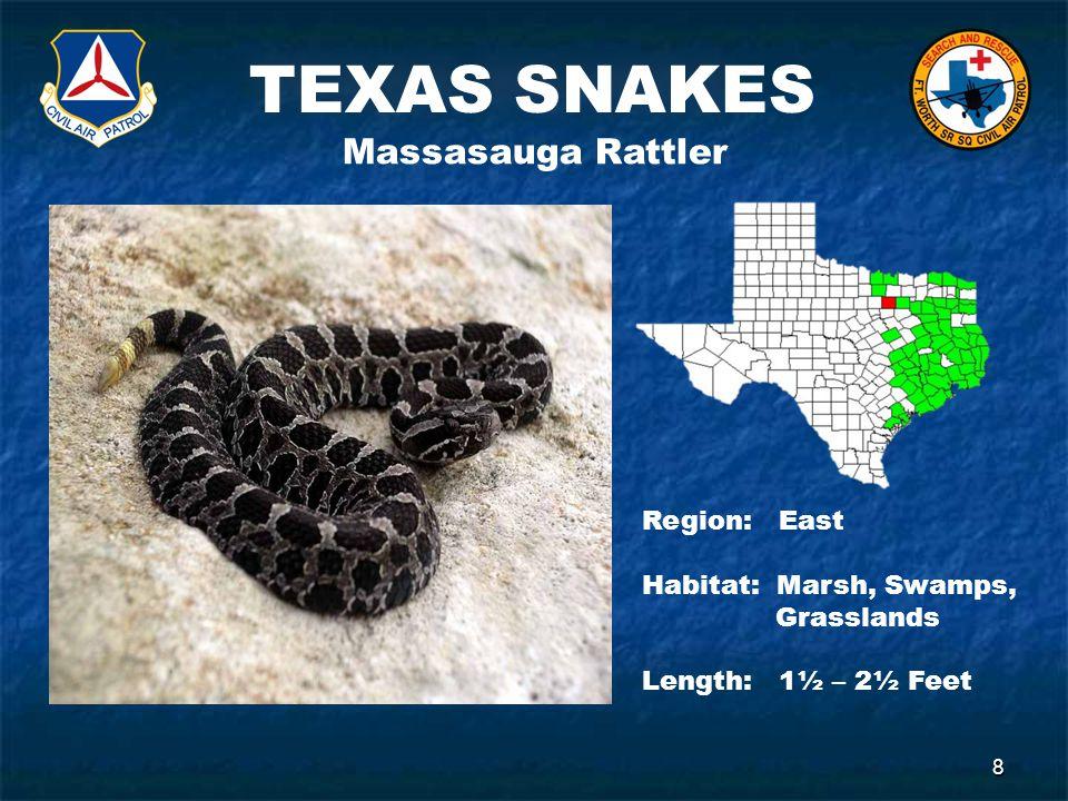 TEXAS SNAKES 8 Massasauga Rattler Region: East Habitat: Marsh, Swamps, Grasslands Length: 1½ – 2½ Feet