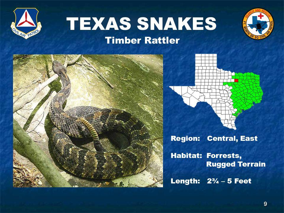 TEXAS SNAKES 9 Timber Rattler Region: Central, East Habitat: Forrests, Rugged Terrain Length: 2¾ – 5 Feet