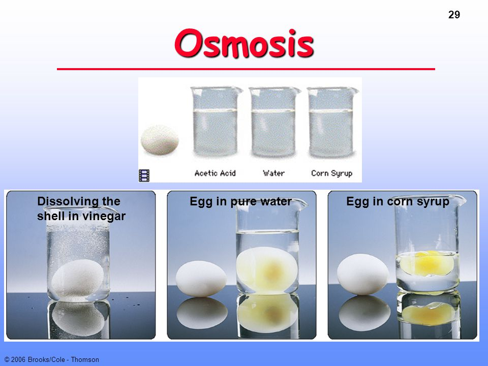 29 © 2006 Brooks/Cole - Thomson Osmosis Dissolving the shell in vinegar Egg in corn syrupEgg in pure water