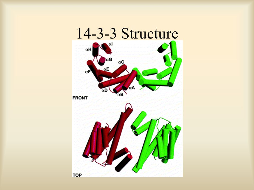 14-3-3 Structure