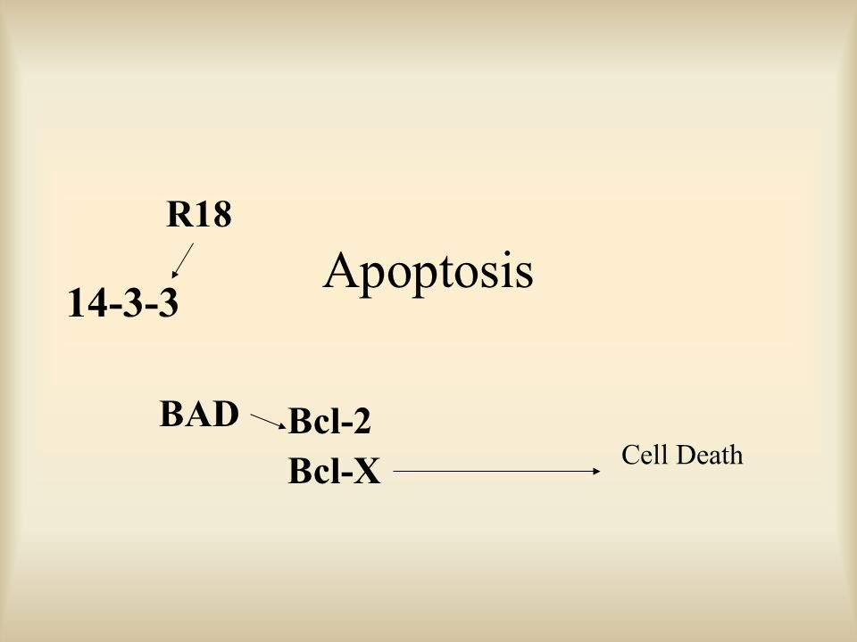 Apoptosis R18 BAD Bcl-2 Bcl-X 14-3-3 Cell Death