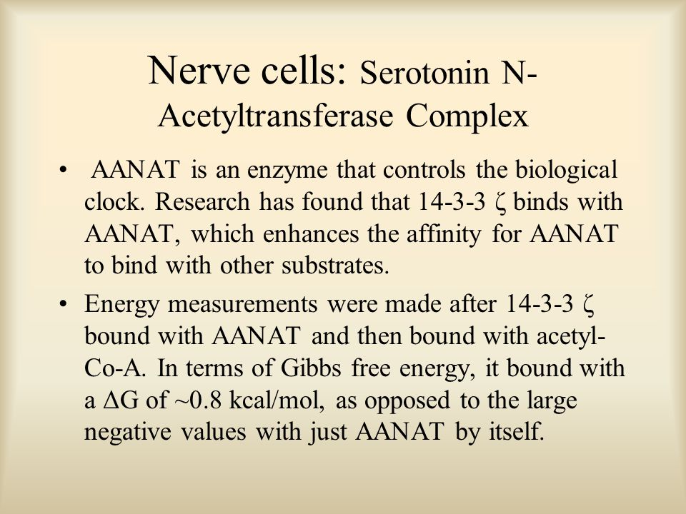 Nerve cells: Serotonin N- Acetyltransferase Complex AANAT is an enzyme that controls the biological clock. Research has found that 14-3-3 ζ binds with