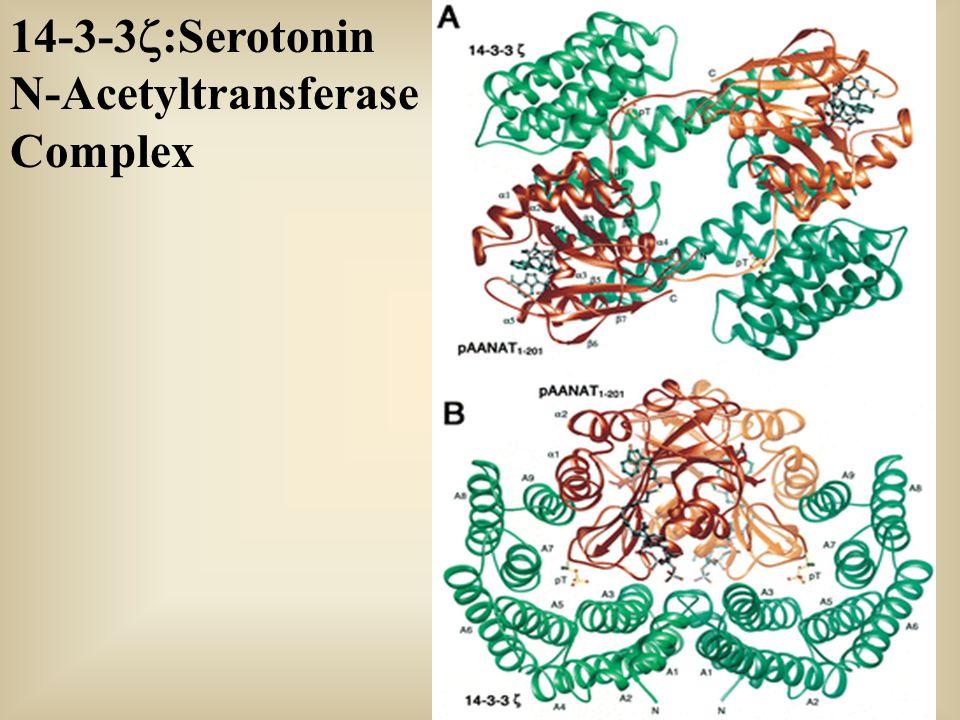 14-3-3  :Serotonin N-Acetyltransferase Complex