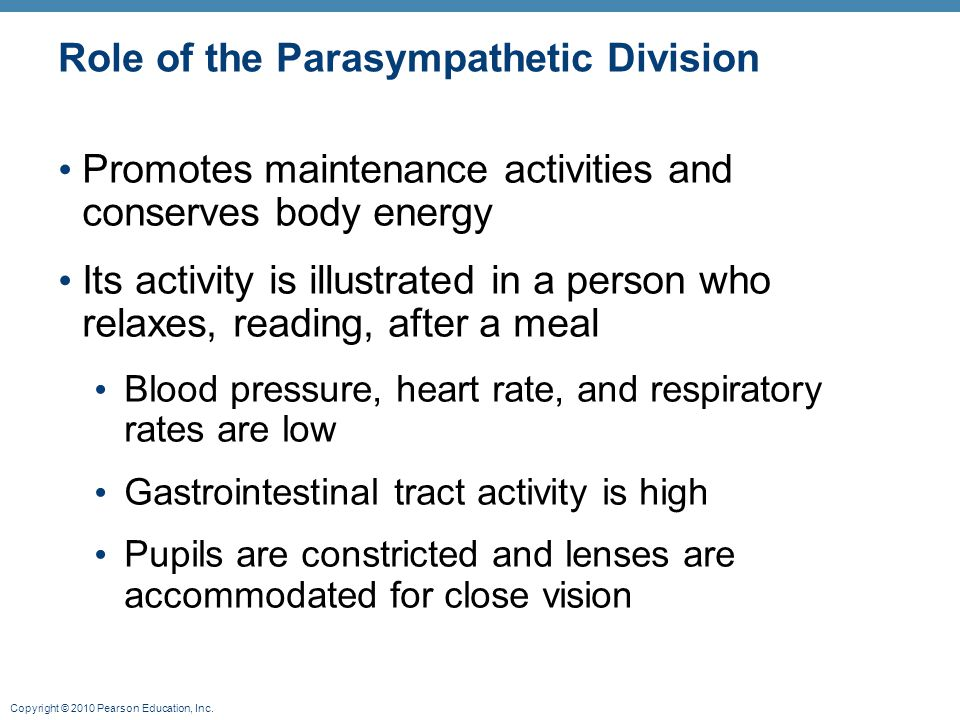 Copyright © 2010 Pearson Education, Inc. Role of the Parasympathetic Division Promotes maintenance activities and conserves body energy Its activity i