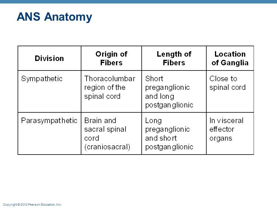 Copyright © 2010 Pearson Education, Inc. ANS Anatomy