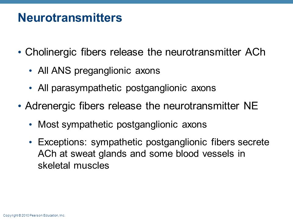Copyright © 2010 Pearson Education, Inc. Neurotransmitters Cholinergic fibers release the neurotransmitter ACh All ANS preganglionic axons All parasym
