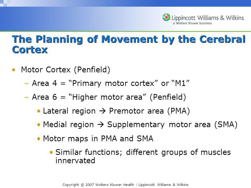 Copyright © 2007 Wolters Kluwer Health | Lippincott Williams & Wilkins The Planning of Movement by the Cerebral Cortex Motor Cortex (Penfield) –Area 4 = Primary motor cortex or M1 –Area 6 = Higher motor area (Penfield) Lateral region  Premotor area (PMA) Medial region  Supplementary motor area (SMA) Motor maps in PMA and SMA Similar functions; different groups of muscles innervated